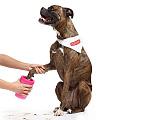 DEXAS MudBuster™ Лапомойка для быстрого и комфортного мытья лап собак МАЛАЯ