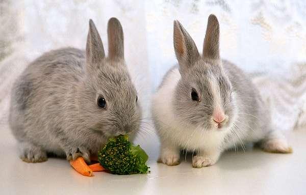Как узнать, что кролик болен? фото как определить что ...
