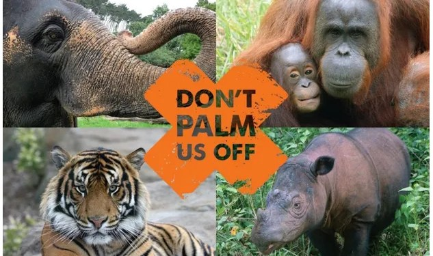 Paleo and Palm Oil