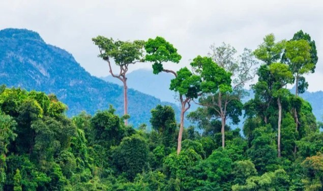 3 Simple Ways Eating Healthy Can Help Save the Amazon Rainforest