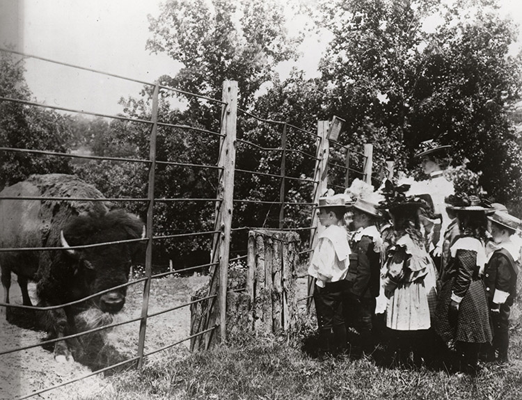 School Children Viewing the First Bison at the National Zoo