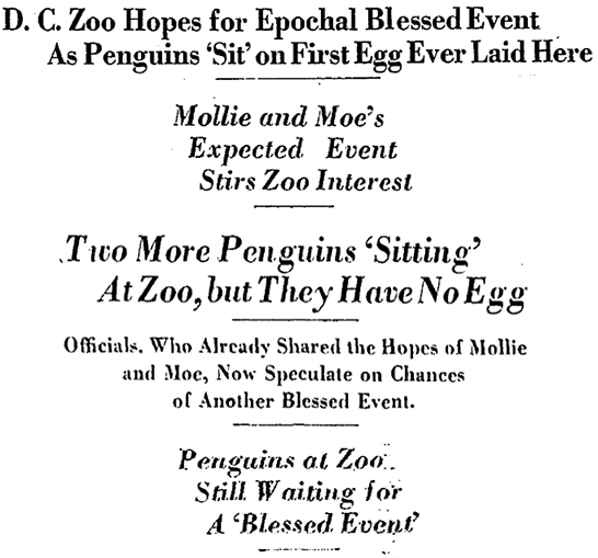 SNZ-penguins-WaPo-1938