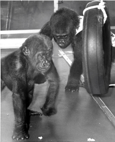 Photo of young Colo and Bongo