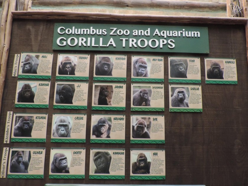 Current Columbus Zoo gorillas