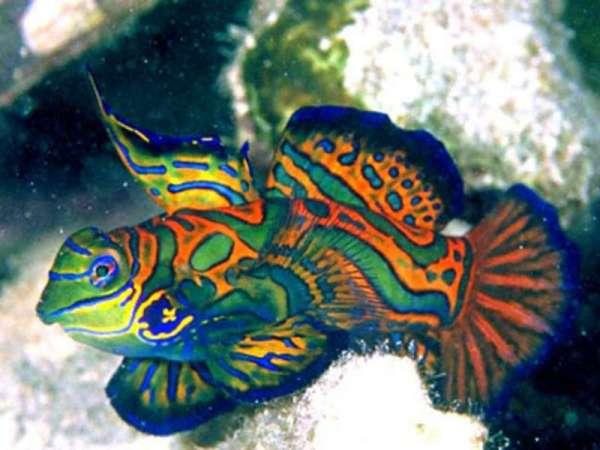 Морские рыбы: название, описание и фото самых популярных ...