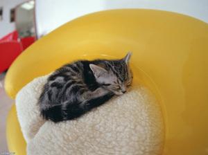 Что делать если котенок не ест и не пьет. Что делать, если ваша кошка не ест: возможные причины и первичная помощь