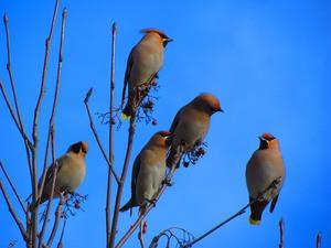 site unde câștigi bani pe păsări