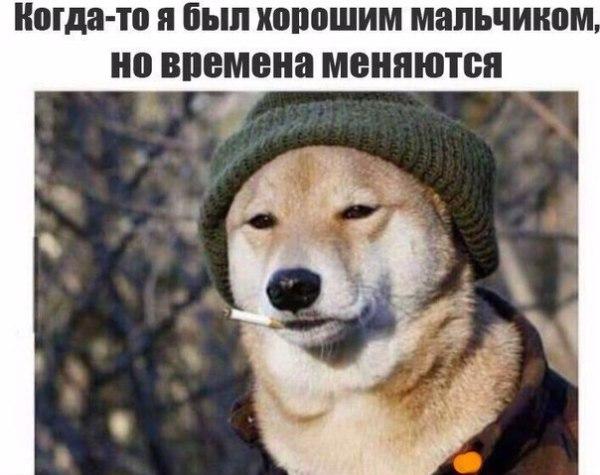 Мемы про собак - подборка лучших