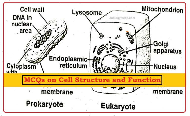 MCQs on Cell Structure and Function