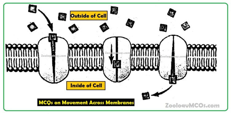 MCQs on Movement Across Membranes Questions and Answers