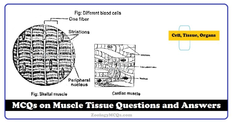 MCQs on Muscle Tissue Questions and Answers