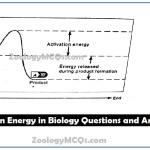 MCQs on Energy in Biology Questions and Answers