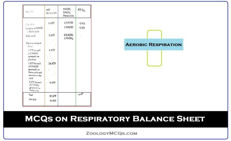 MCQs on Respiratory Balance Sheet For Aerobic Respiration