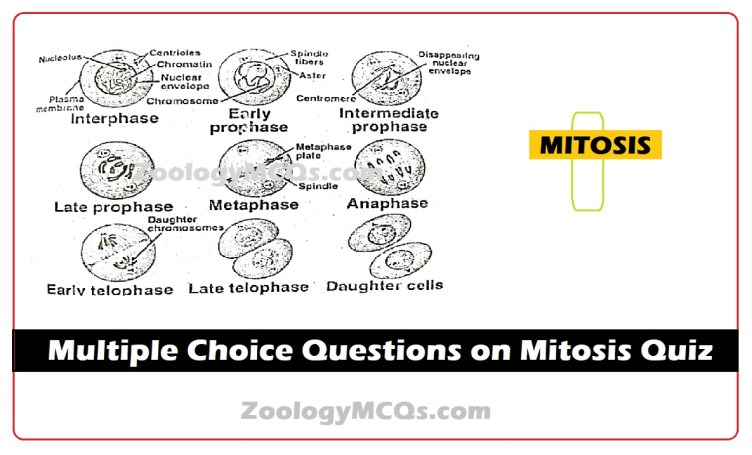 Multiple Choice Questions on Mitosis Quiz