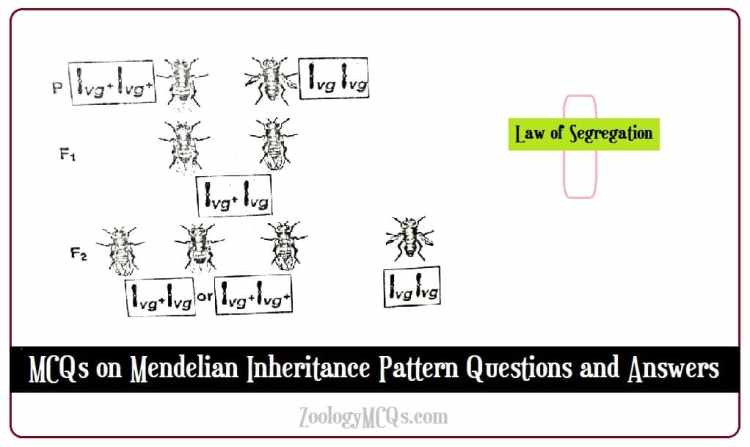 MCQs on Mendelian Inheritance Pattern Questions and Answers