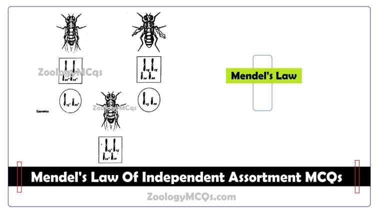 Mendel's Law Of Independent Assortment MCQs