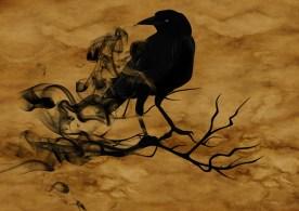 raven-1002849_1920