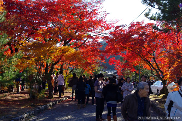 Image result for the best photos of japan