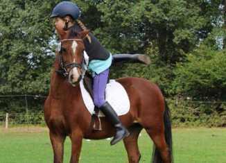 cil pony centro ippico lombardo