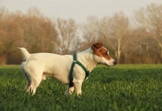 cane-324x221 Cani liberi a Milano: sperimentazione in due parchi del centro Ambiente