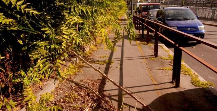 rami impediscono il passaggio dei pedoni su un marciapiedi