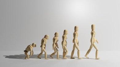 Photo of Las partes del cuerpo humano que no tienen sentido práctico: el fascinante mundo de los vestigios de la evolución