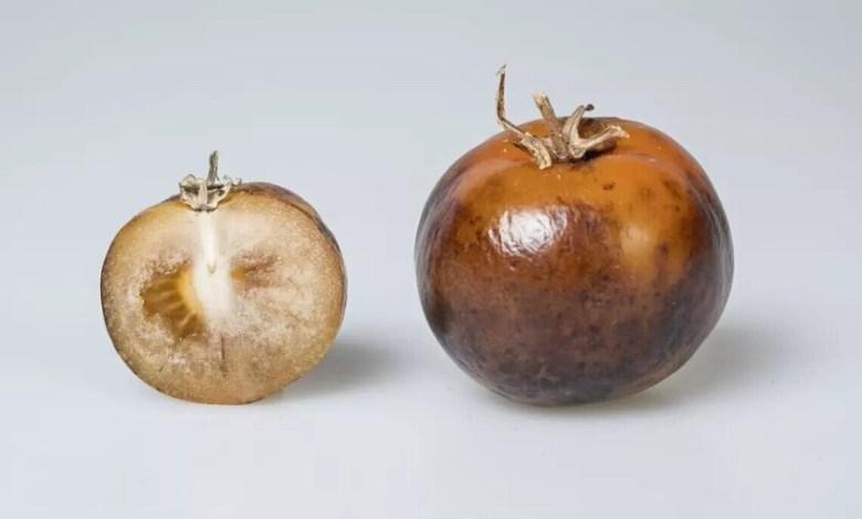 no-tienen-la-mejor-pinta-del-mundo,-pero-estos-tomates-quieren-revolucionar-la-forma-en-la-que-combatimos-el-parkinson-en-gran-parte-del-mundo