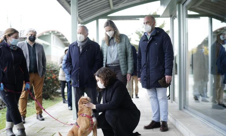 madrid-adelanta-el-pago-de-1,8-millones-en-ayudas-para-fomentar-la-proteccion-y-adopcion-de-animales-de-compania