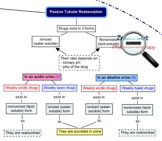 Passive tubular reabsorption - Excretion drug interactions