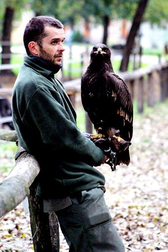 eagle carried on a hand