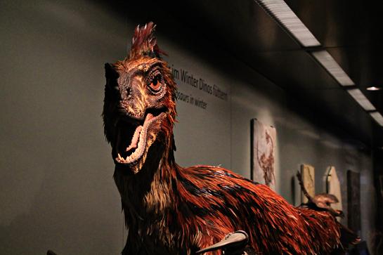 vienna nature science museum dinosuars
