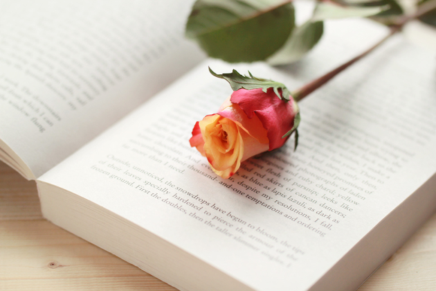 rose laying on an open book