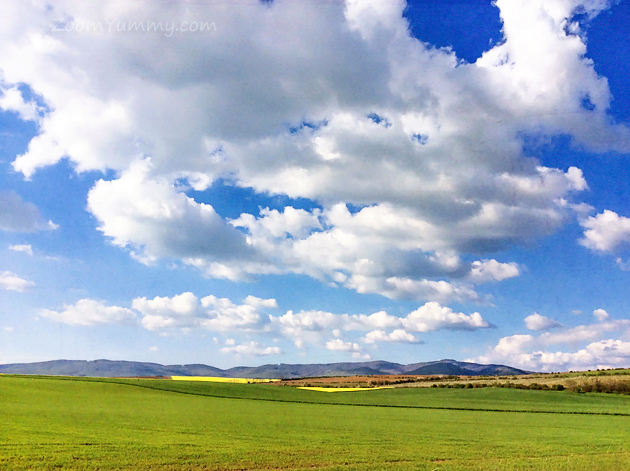 green grass blue skies