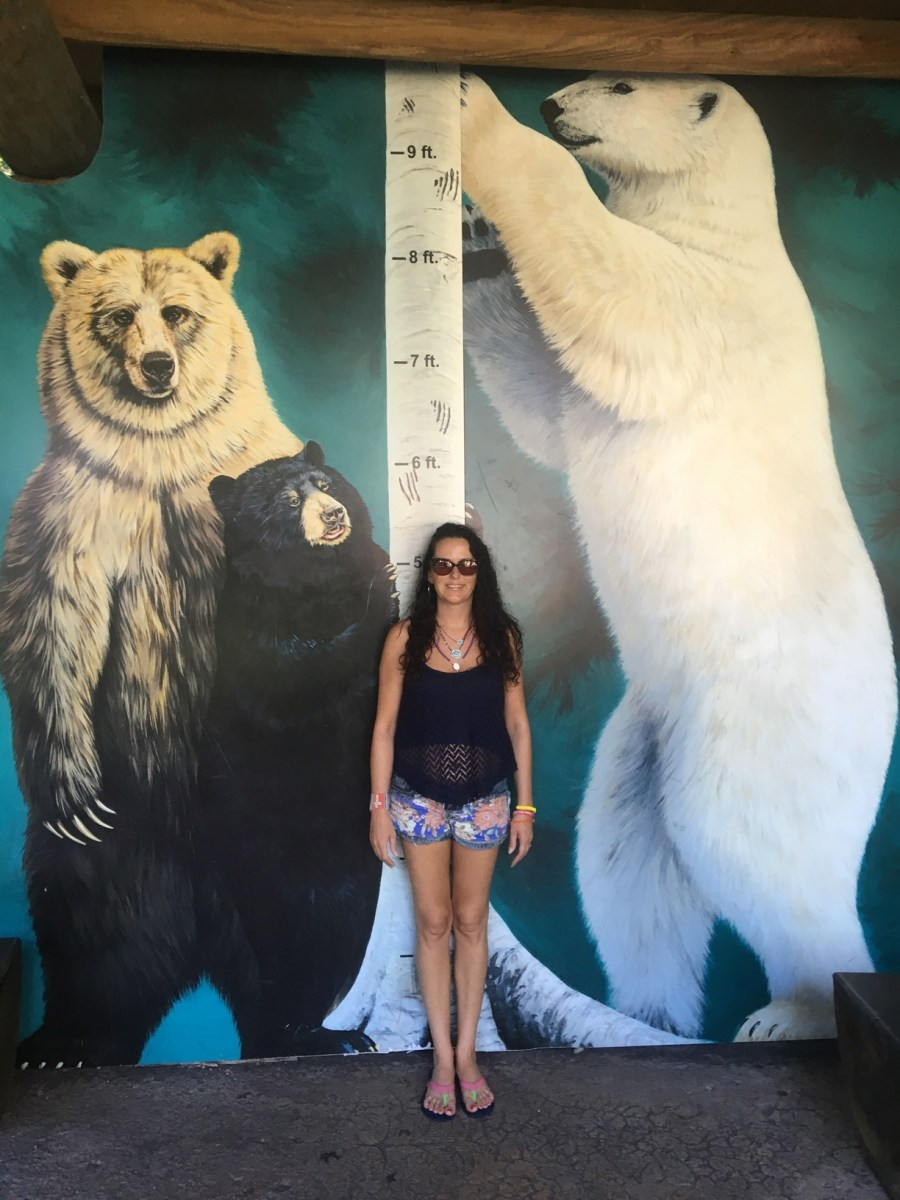 How Tall is a Polar Bear - Polar Bear Height