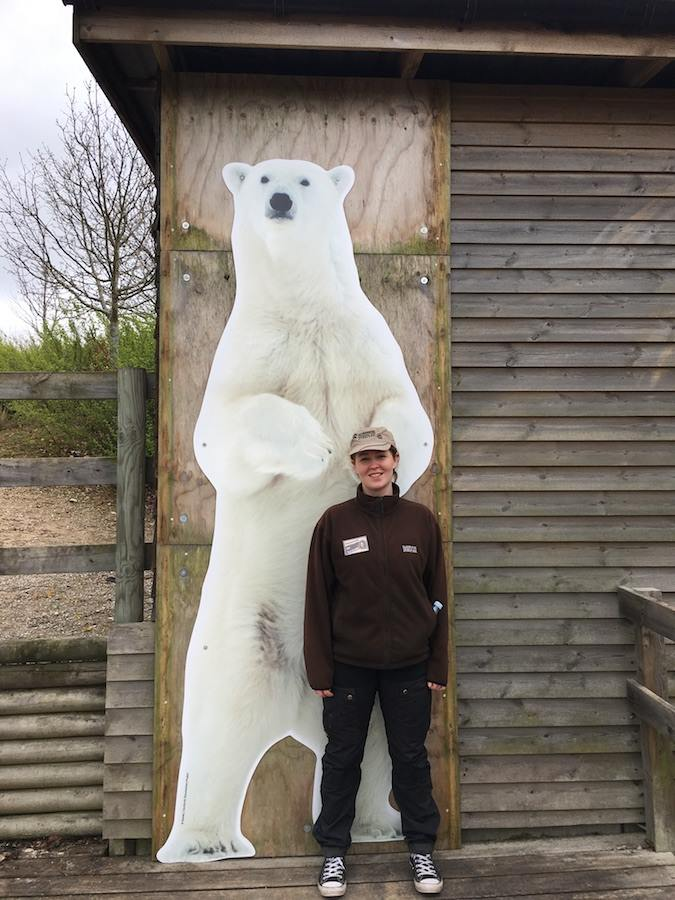 How big is a polar bear
