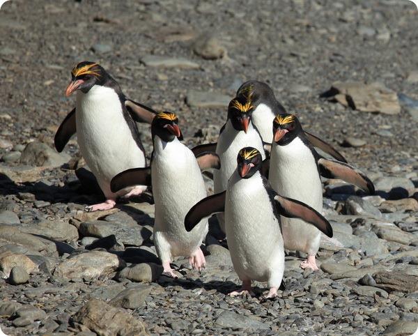 pitsburgo pingvinų prekybos galimybės