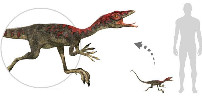 Compsognathus (Compsognathidae). Por Linda Bucklin   Shutterstock.com
