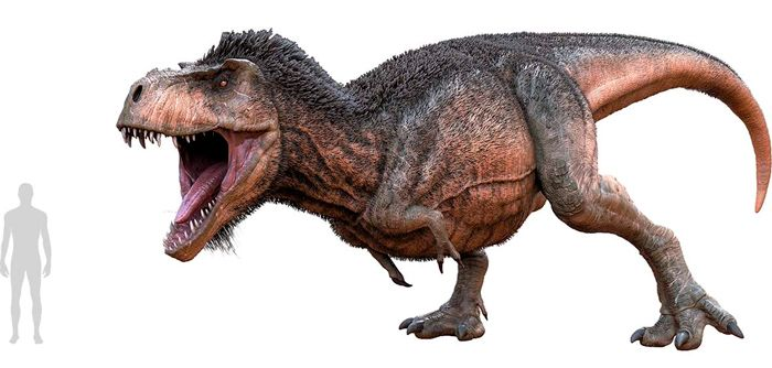 Tyrannosaurus rex (Tyrannosauridae). Por Herschel Hoffmeyer   Shutterstock.com