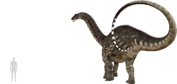 Apatosaurus (Diplodocoidea). Por Catmando   Shutterstock.com