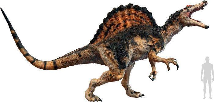 Spinosaurus (Megalosauroidea). Por Herschel Hoffmeyer   Shutterstock.com