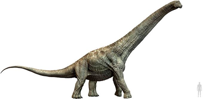 Alamosaurus (Titanosauria). Por Herschel Hoffmeyer   Shutterstock.com