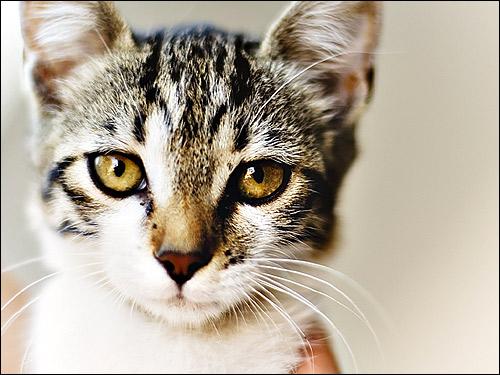 Кошка-мама, кошачьи свадьбы для родов кошка ищет тихое ...