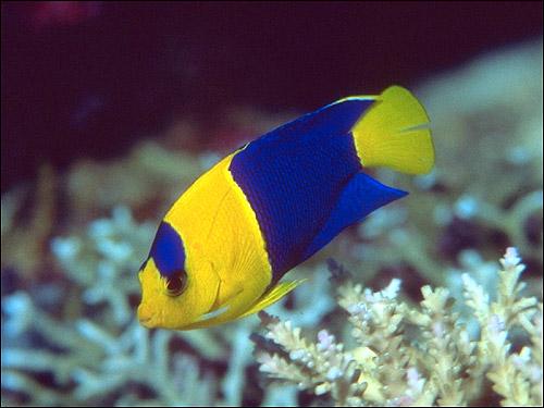 Анатомия рыб, рыбы позвоночные животные чешуя рот рыб ...