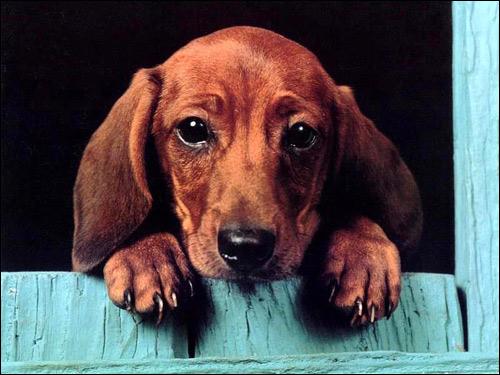 Поведение собак отражающее их пригодность служебному ...