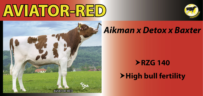 Aviator Red red
