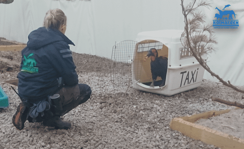 Training a Hornbill