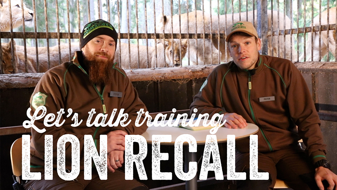 Review of the Lion Recall at Kolmårdens Djurpark