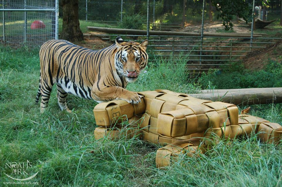 Enrichment Thoughts With Hose2Habitat