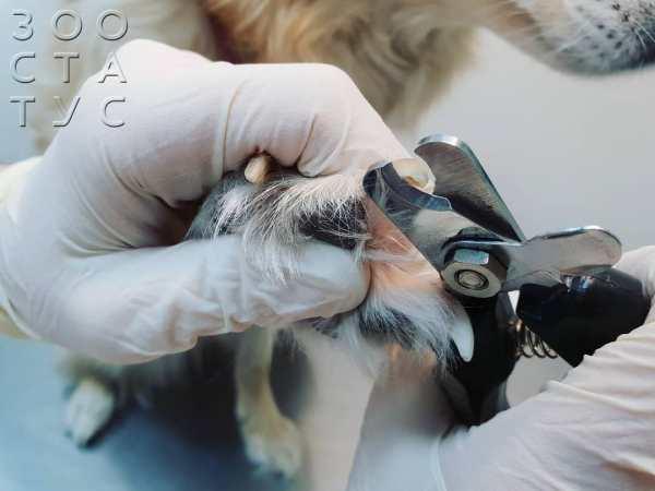 Что делать, если собака повредила коготь. Ветеринарная ...