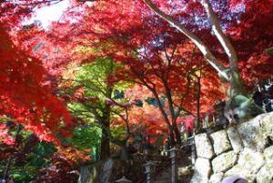 紅葉-05大山寺